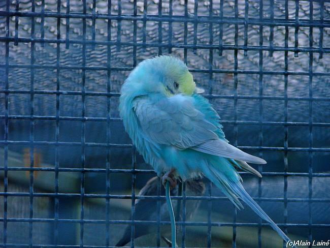 Oiseaux_exotiques_3D_c07___6