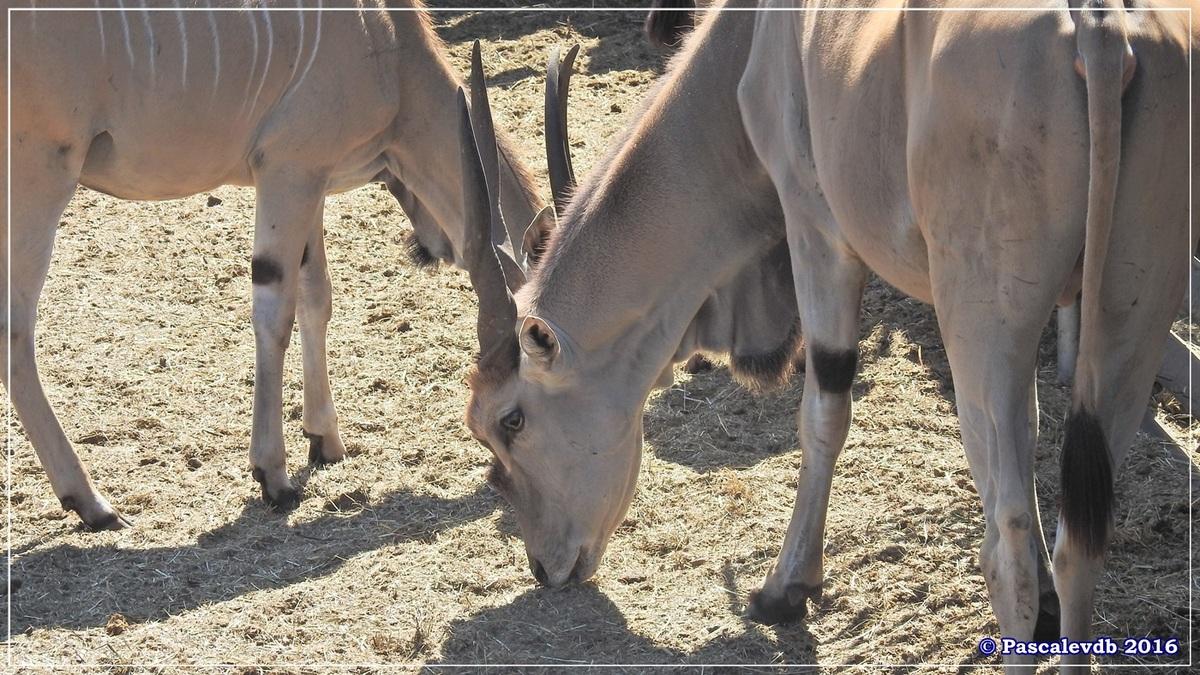 Zoo du Bassin d'Arcachon - Août 2016 - 9/15