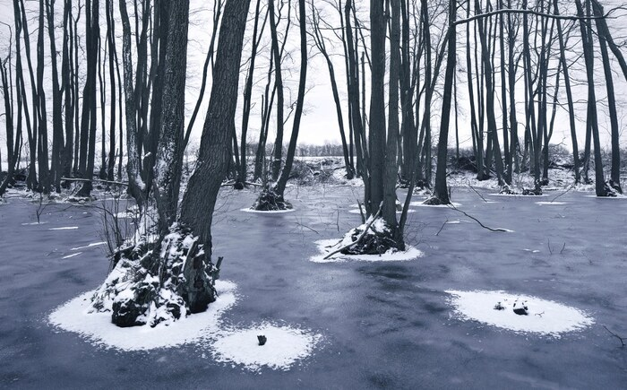 Des paysages glacés racontent un «conte d'hiver» sur les forêts enneigées d'Europe