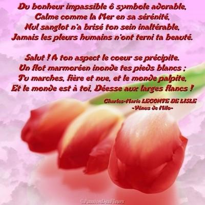 carte poeme amour010