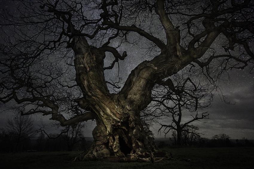 Les plus vieux arbres de la planète sous les étoiles