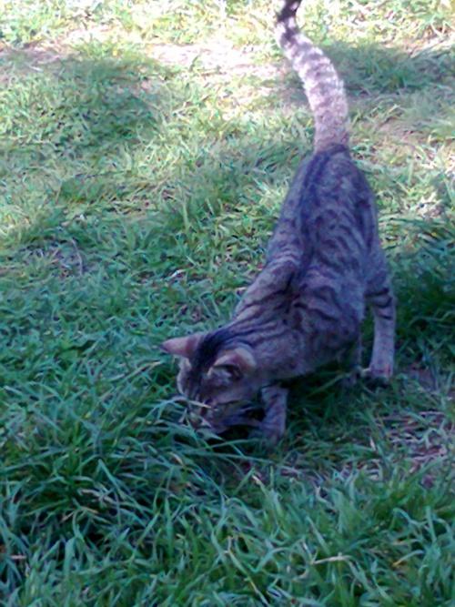 une petite nouvelle a chat village Glory