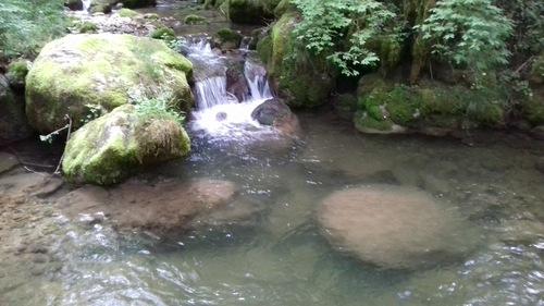 Séjous truites en Savoie 2 ème partie