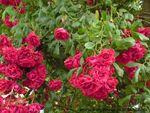 Une petite ballade dans les jardins anglais... entre deux averses...