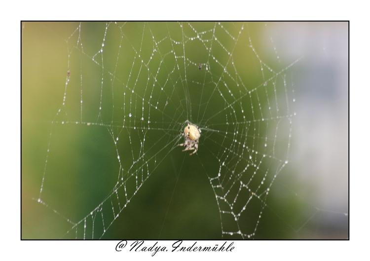 Araignée et sa toile sous la pluie