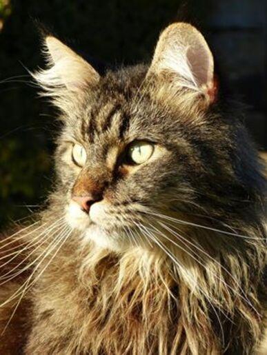 Pour JUPITER, notre chat, tué d'une balle en pleine tête (Gaelle)