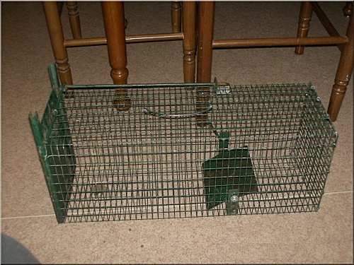news-cage.jpg