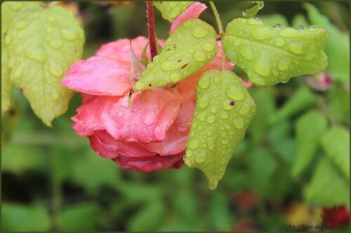 Promenade sous la pluie
