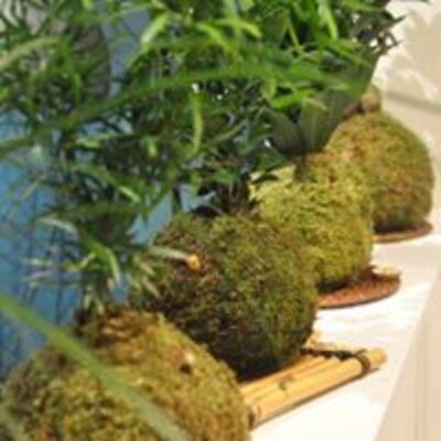 Galerie végétale et cabinet de curiosités
