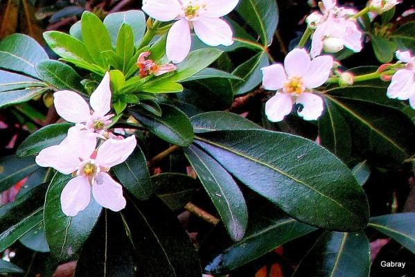 y05---Fleurs-blanches.JPG