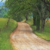 country_road_through_cades_cove_great_smoky_mountains_tennessee - copie