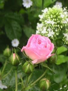 Bouquet Parfait1