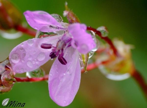Fleurs des fossés...