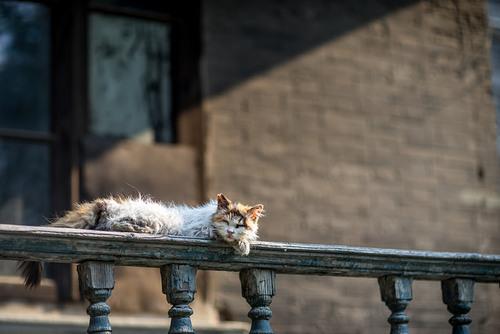 10 - Des chats en couleurs
