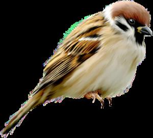 Oiseau du 06/10