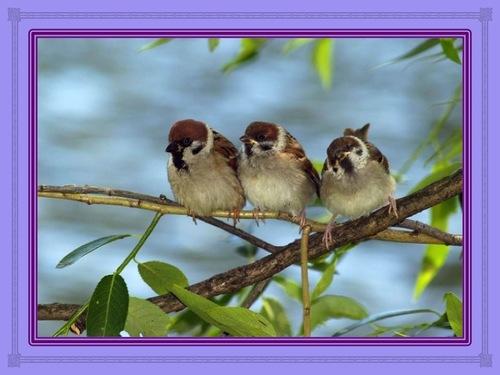 Les vieux oiseaux