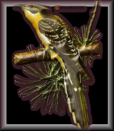 Tube d'oiseau 2975