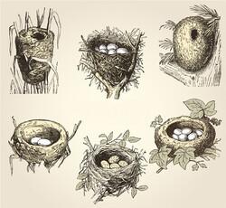 differentes sortes de nid oiseaux