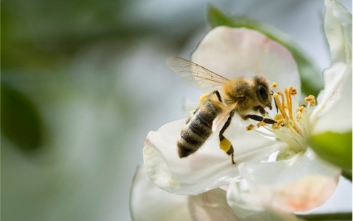 L'abeille et la fleur
