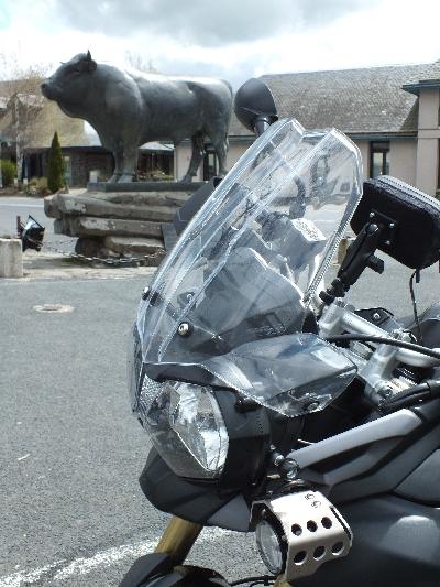 Balade de printemps en Aubrac : moto et jonquilles !