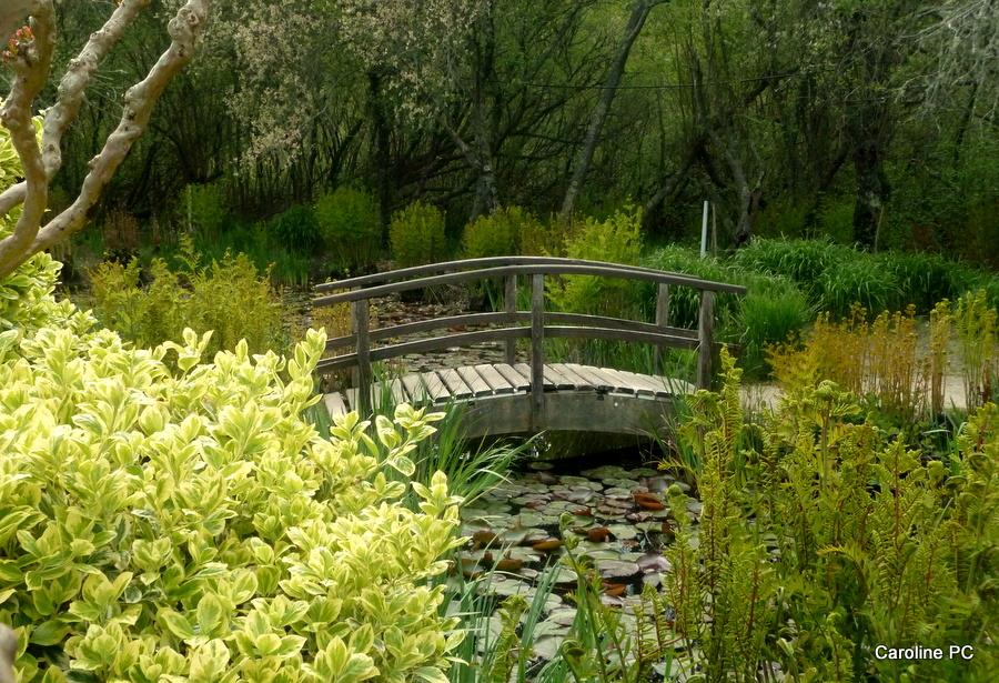 la promenade fleurie au lac d'aureilhan-mimizan - caroline pc40