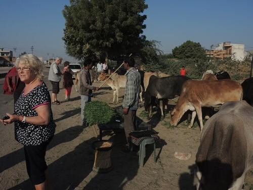 Inde 2014- Jour 7- Sur la route de Pushkar