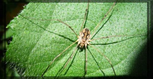 Ne m'appelez plus araignée !