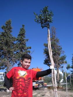 Fête de l'arbre…c'est bientôt !