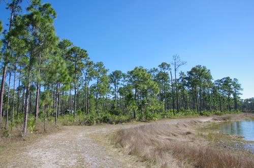 Jour 2 - Les Everglades