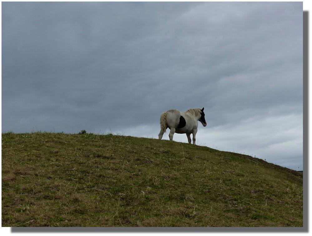 ...sauf peut-être parfois, lorsqu'un bon cheval se met en colère, et qu'il rue des quatre fers, comme ça, pour voir où ça va...