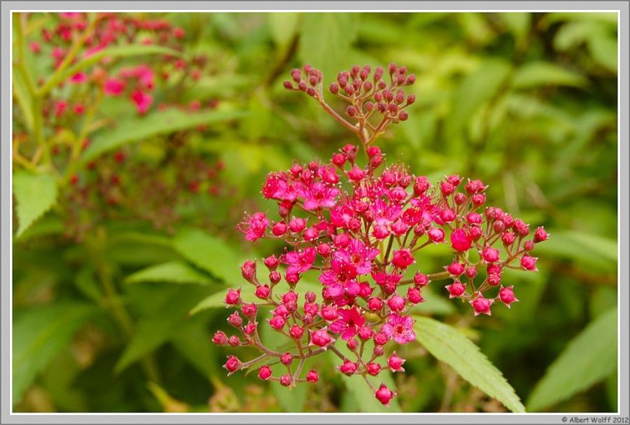 Fleurs sauvages ou non