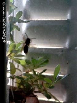 Aide aux abeilles