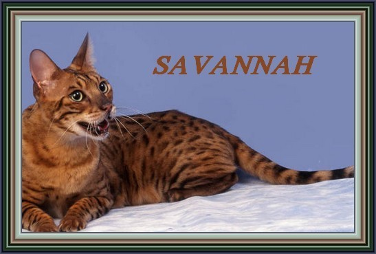 savannah CO2