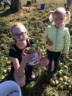 Récolte des pommes et des poires