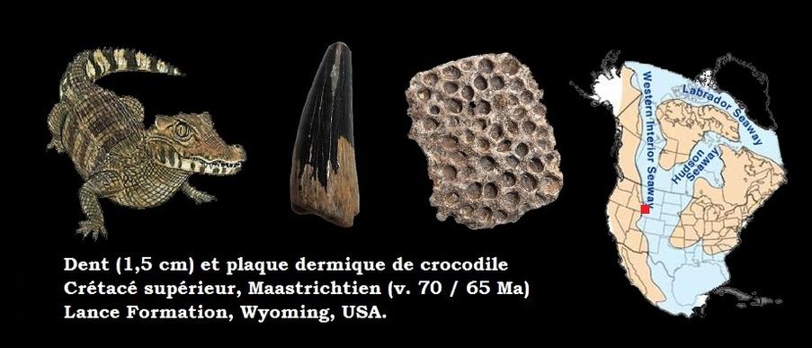 crocodile du crétacé USA
