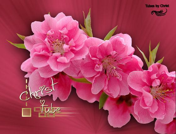 Branche Cerisier rose
