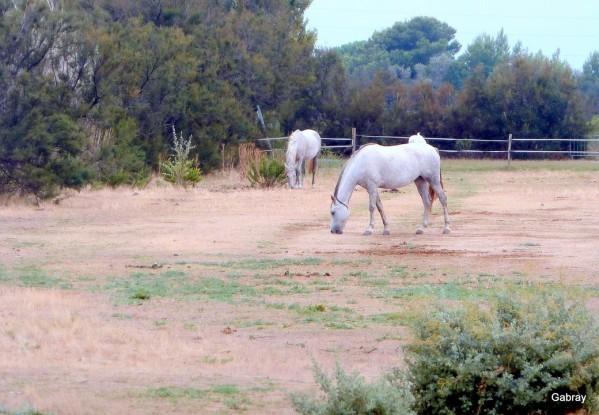 z08 - Deux chevaux