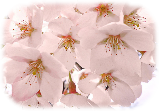 Tavaszi png képek 3.