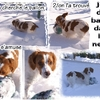 2010_02 12 2010 neige veurey (4 jeu ballon).jpg
