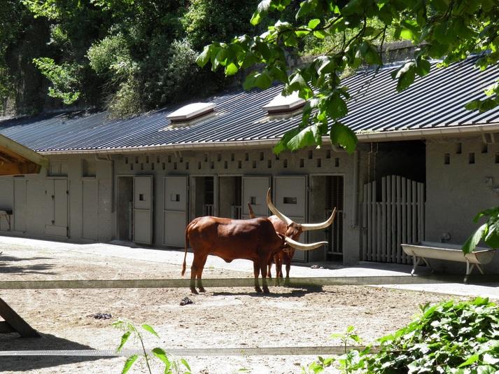 Un petit tour au zoo