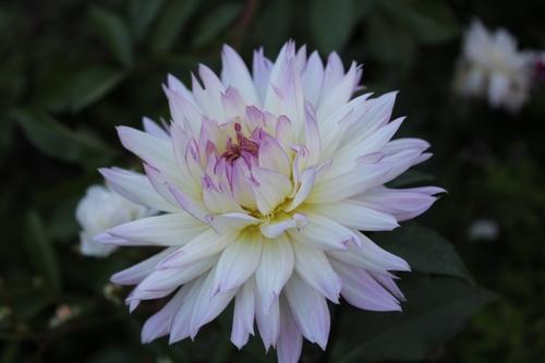 Les dernières floraisons