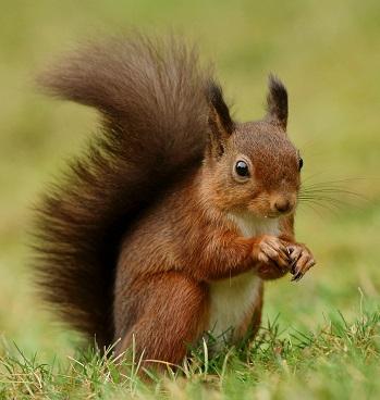 L'écureuil se donne tous les moyens pour survivre ...