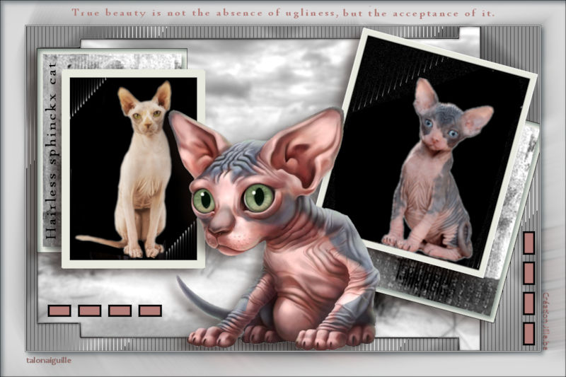 *** Hairless Cats Photography ***