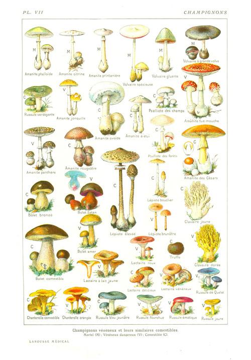 Tous les champignons ne sont pas bons !