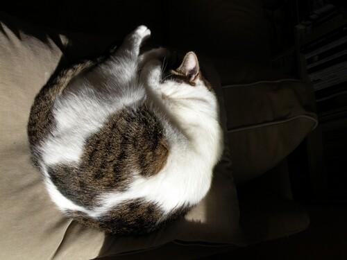 Il ne faut pas réveiller un chat qui dort