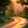 nature-wallpaper-golden-road-france