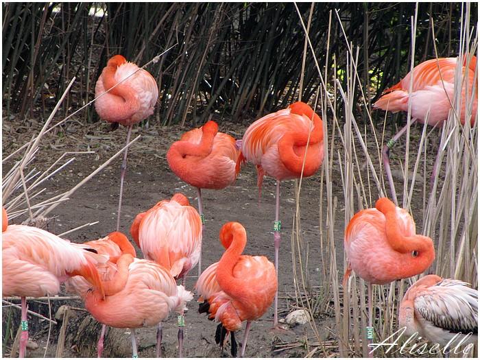 Parc des Oiseaux # 1
