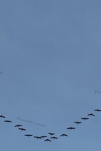 Oiseaux migrateurs de Mars 2015