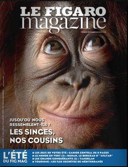 Le Fig Mag - Les singes nos cousins