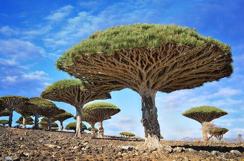 Des arbres magnifiques.....
